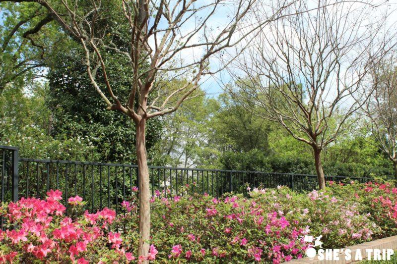 Azalea Trail Flowers